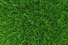 Green grass. background texture. fresh spring green grass. 3d rendering. Green grass. background texture. fresh spring green grass. 3d rendering royalty free illustration