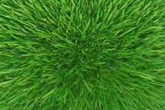 Green grass. background texture. fresh spring green grass. 3d rendering. Green grass. background texture. fresh spring green grass. 3d rendering stock illustration