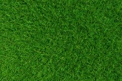 Green grass. background texture. Royalty Free Stock Images