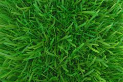 Green grass. background texture. Royalty Free Stock Photos