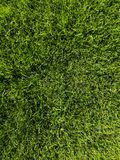 Green grass background texture. Golf or football field. Background and texture of green grass pattern from golf course