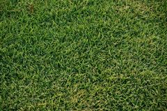 Green grass background texture. For design material royalty free stock photo