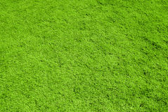 Green grass background  texture. Green grass background and high texture resolution on the day Royalty Free Stock Photography