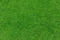 Green grass background texture Royalty Free Stock Photography
