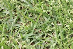 Green grass background texture macro. Fresh cut green grass background texture macro Stock Images