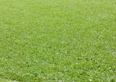 Green grass background texture macro. Fresh cut green grass background texture macro Royalty Free Stock Images