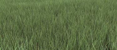 Green grass background texture Stock Photo
