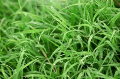 Green grass background texture. Natural green grass background texture Stock Image