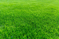 Green grass background texture. Natural green grass background texture at an slight angle Stock Photography