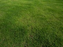 Green grass field background, texture, pattern. Food, court. stock photo