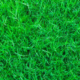 Green grass background texture Royalty Free Stock Photos