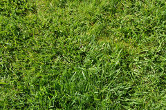 Green grass background texture. Photo Royalty Free Stock Image