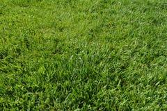 Green grass background texture. Photo Stock Photo