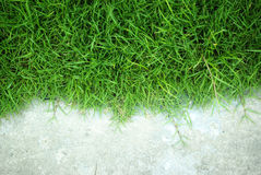 Green grass background texture. Background grass playground, fitness presentations Stock Photo