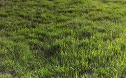 Green grass. Stock Photos