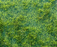 Green grass background Stock Photos