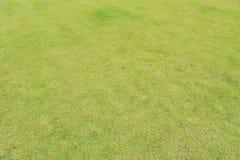 Green grass background texture. Stock Photo