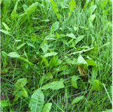 green grass-background Stock Images