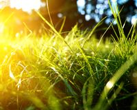 Green grass background, toned bright grass closeup view with sun beams and lens flare royalty free stock photo