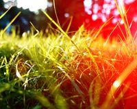 Green grass background, toned bright grass closeup view with sun halo lens flare royalty free stock image