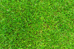 Green grass background. Turf grass surface abstract as soccer field Royalty Free Stock Images