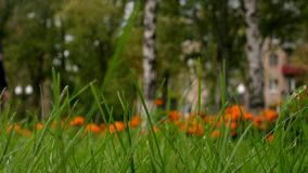 Green grass background. Unrecognized people walking in park. Urban scene. Dolly stock video footage