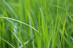 Green grass background. Green grass in vegetable garden Stock Images