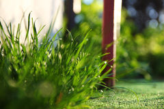 Green grass background Royalty Free Stock Photo