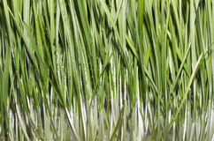 Green Grass Background Wallpaper Stock Photos