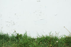 Green grass on a background of white cracked paint Royalty Free Stock Image
