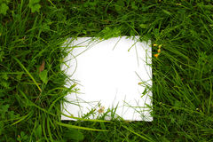 Green grass background with white paper Royalty Free Stock Image