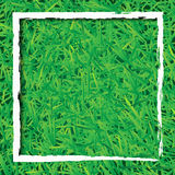 Green grass background with white rectangle Stock Photo