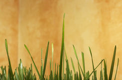 Green Grass Background with yellow space Royalty Free Stock Photo