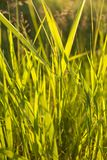 Green grass in backlight. Green grass background in backlight Stock Photos