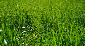 Green grass backround stock photos