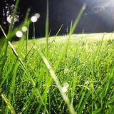 Green grass backyard Royalty Free Stock Photo