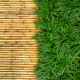 Green grass on bamboo. Background Royalty Free Stock Photo