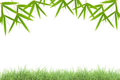 Green grass with bamboo leaves frame isolated on white backgrou stock photos