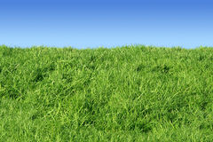 Green grass bank. Green grass bank and a blue sky Stock Images