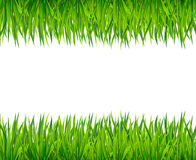 Green grass banner Royalty Free Stock Image