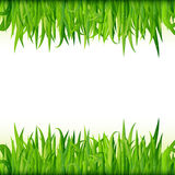 Green grass banner vector Royalty Free Stock Photography