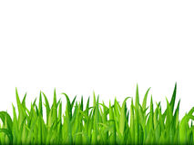 Green grass banner. Vector background Royalty Free Stock Image