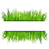 Green grass banner. Vector background Royalty Free Stock Photo