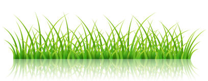 Green grass banner,  on white. Horizontal, realistic green grass banner with reflection,  on white background. Vector illustration for background, footer or Stock Photography