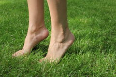 On the green grass barefoot girl. The girl is standing on tiptoes. Bare feet girls close up. They were green lawn.  Feet in Focus Royalty Free Stock Photo