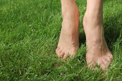 On the green grass barefoot girl. The girl is standing on tiptoes. Bare feet girls close up. They were green lawn.  Feet in Focus Royalty Free Stock Photography
