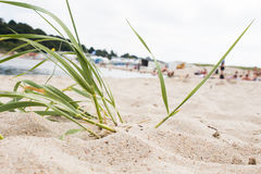 Green grass on beach Stock Images
