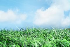 Green Grass and Beautiful Blue Sky with Clouds. Green grass and beautiful blue sky with white wispy clouds and sunlight. Great for backgrounds and environmental royalty free stock photos