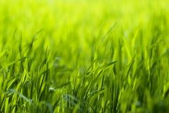 Green grass. Beautiful green grass close-up photo Stock Photography
