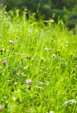 Green grass on a beautiful day. Royalty Free Stock Image
